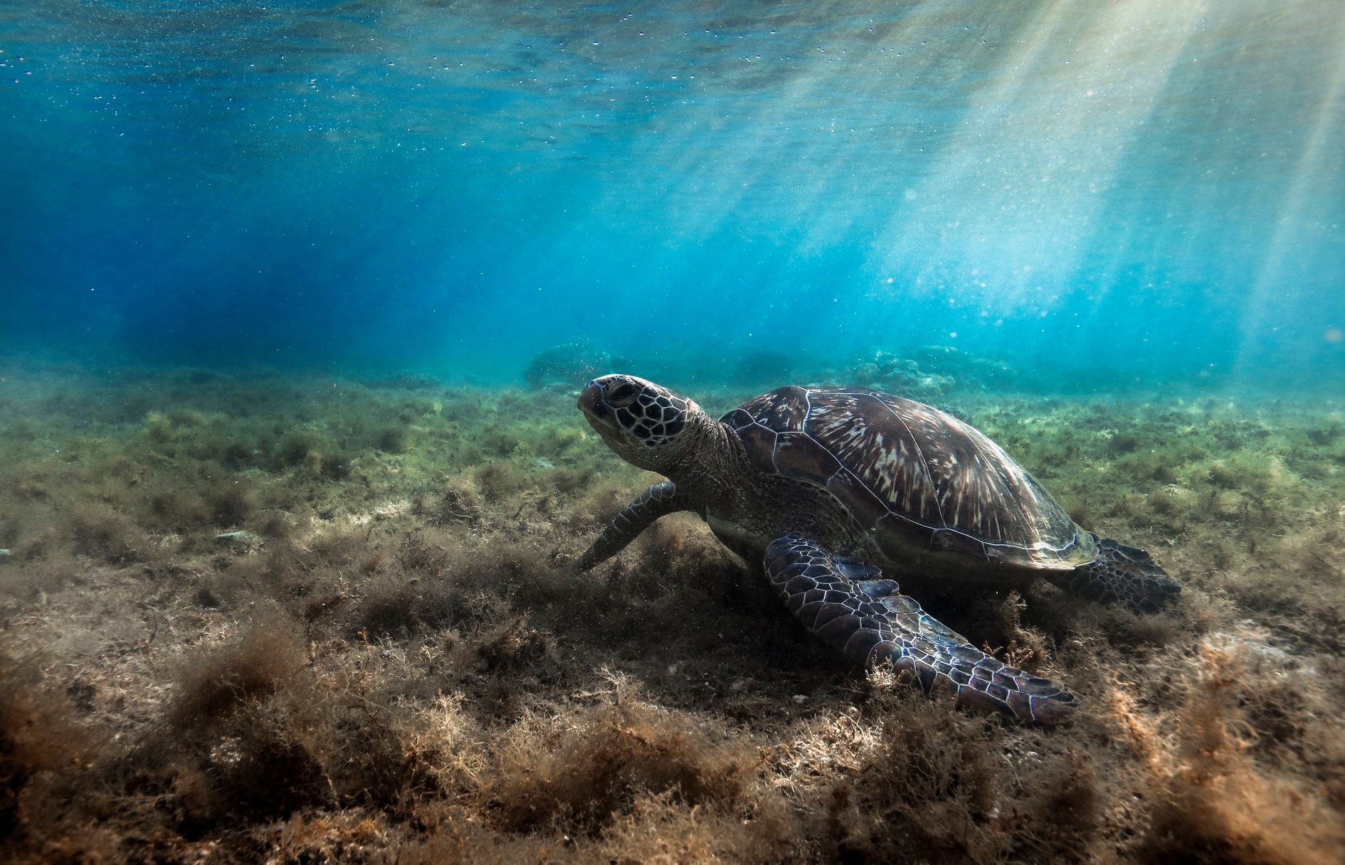 spotting a marine turtle