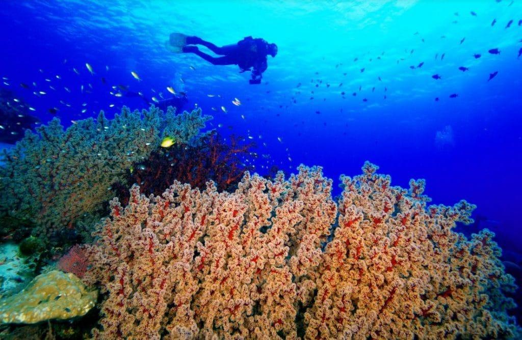 diving in tubbataha reefs