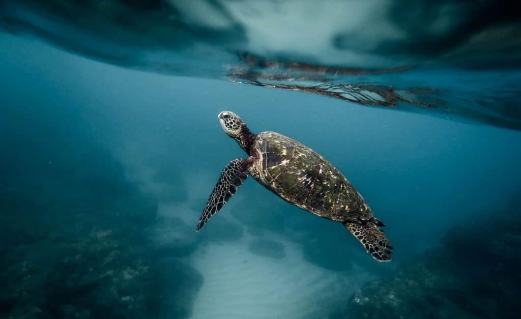 sea turtle from Pixabay