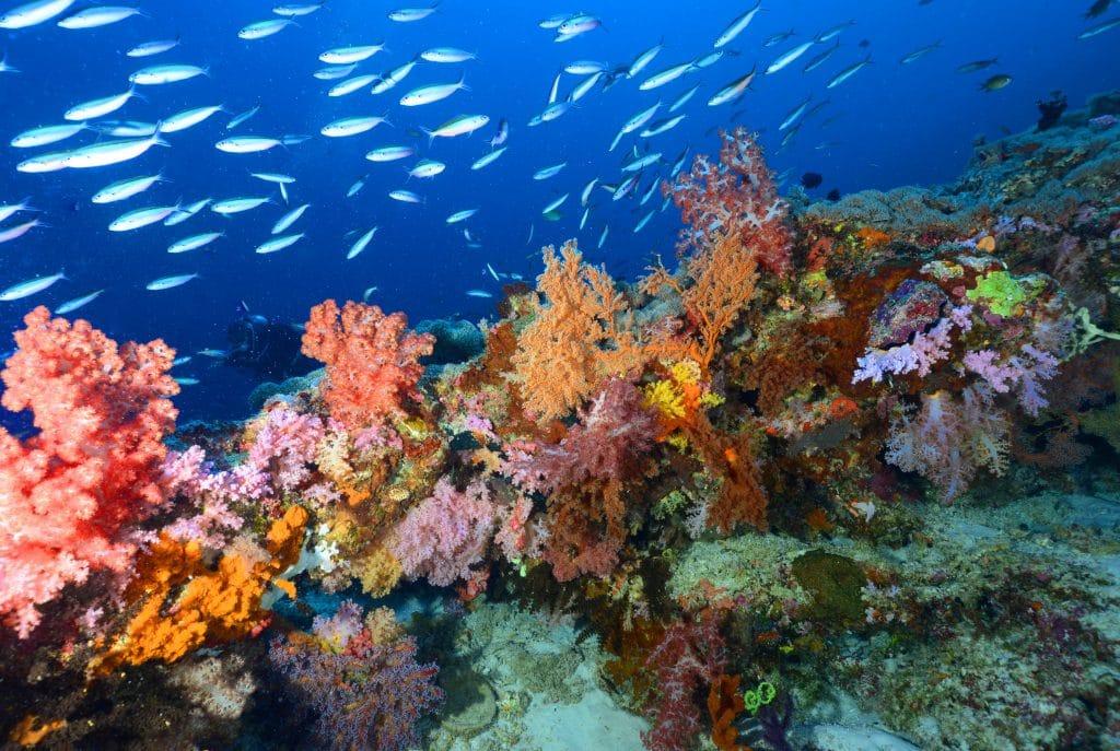 soft corals in cagayancillo