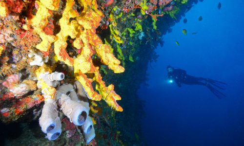 Diver Colorful wall