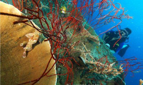 Diver Kogyo maru