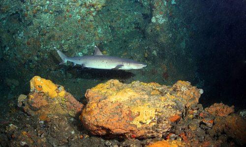 Gato Tunnel Shark small