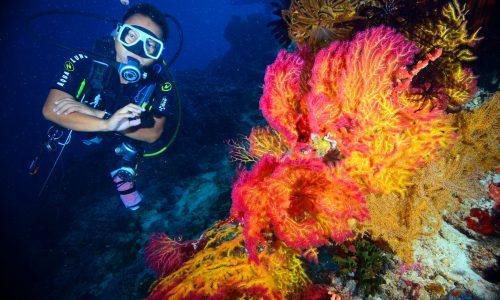 Louie & fan coral