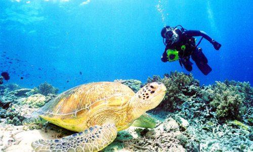 turtle milton